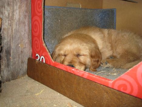 Nap Time at Dog Bark Park