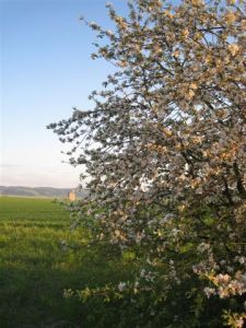 Camas Prairie Idaho in spring