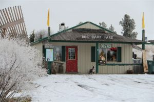 Winter at Dog Bark Park, photo by Wild Web West